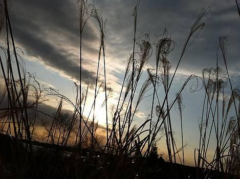 Sunset Tail by Dan Staz