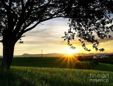 Sunset under the Tree by Alfredo Rodriguez