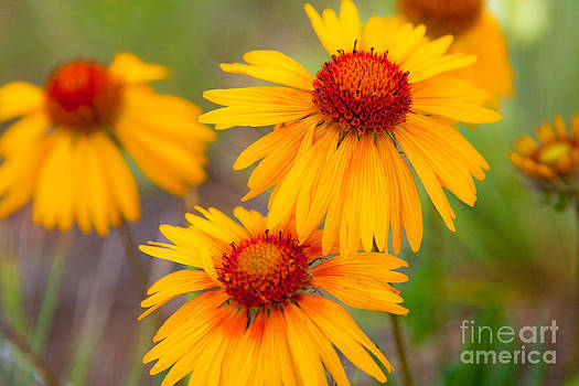 Sunshine by Barbara Schultheis