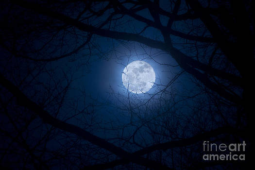 Supermoon Rising by Megan Noble