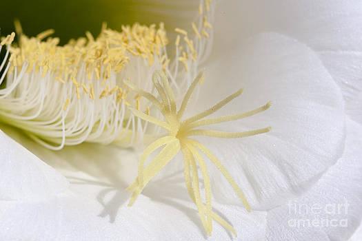 Darcy Michaelchuk - Supple Cactus Flower