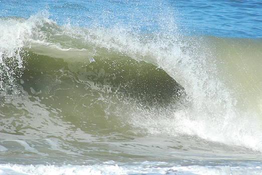 Surfs Up by Wanda Jesfield