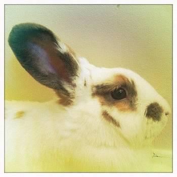 Susana Oria 🐰 #cute #rabbit #bunny by Ange Exile DuParadis
