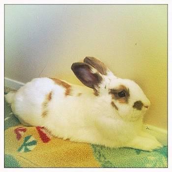 🐇susana Oria #floofy #rabbit by Ange Exile DuParadis