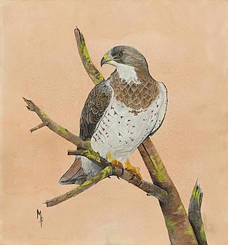 Swainson's Hawk by Marsha Friedman