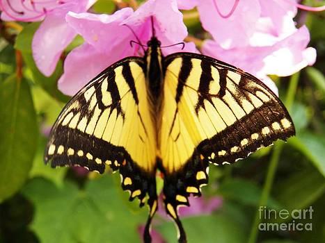 Judy Via-Wolff - Swallowtail Butterfly