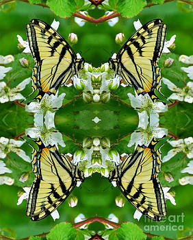 Swallowtail Supreme  by Whispering Feather Gallery