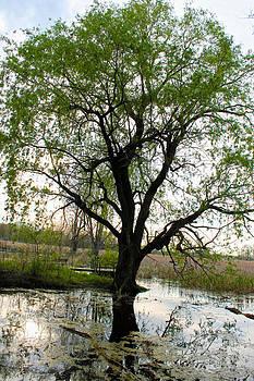 Rebecca Frank - Swamp Tree