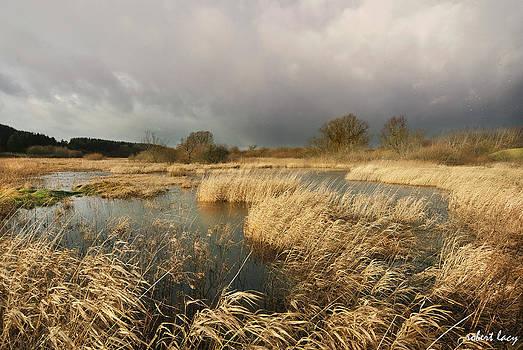 Robert Lacy - Swampland