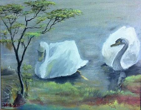 Swan couple by M Bhatt