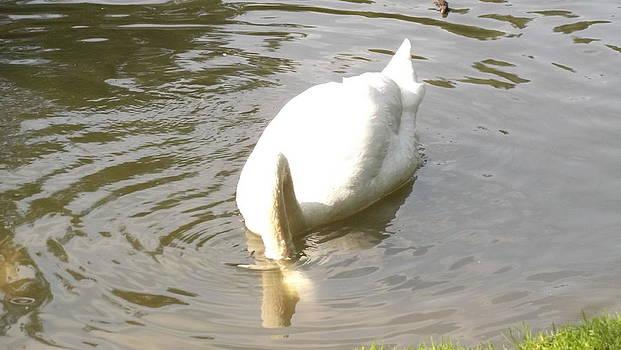 Swan by Furin Erika