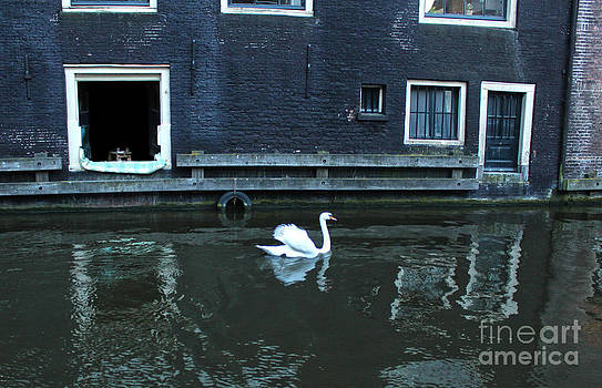 Gregory Dyer - Swan in Amsterdam Canal