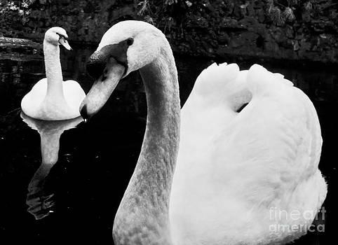 Nabucodonosor Perez - Swan lake