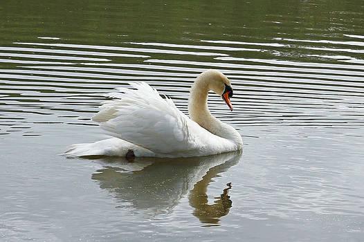 Carmen Del Valle - Swan Mirror