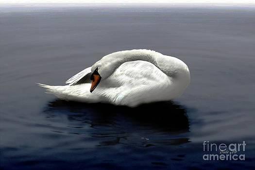 Dale   Ford - Swan Posing