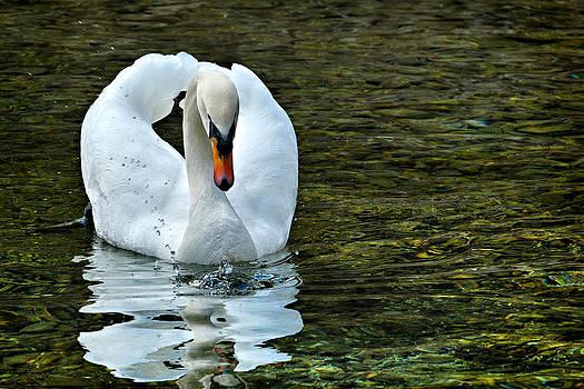 Zoran Buletic - Swan