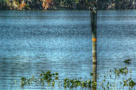 Ronald T Williams - Swanee River
