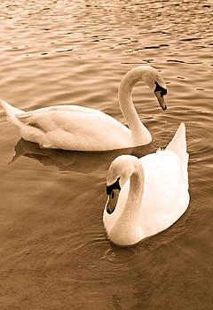 Carmen Del Valle - Swans in Sepia