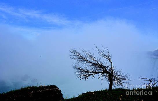Pravine Chester - Swaying Tree