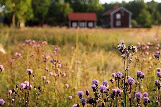 Swedish Summer Landscape by Kent Andersen