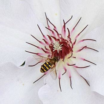 Sweet Bee by Tami Rounsaville