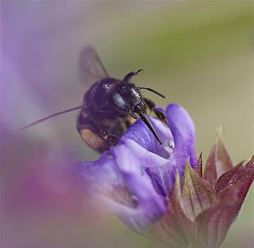 Sweet Nectar 2 by Steve Vanhemelryck