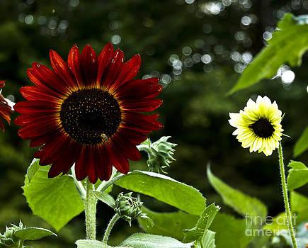 Brenda Giasson - Sweet Nectar