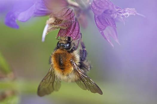 Sweet Nectar by Steve Vanhemelryck
