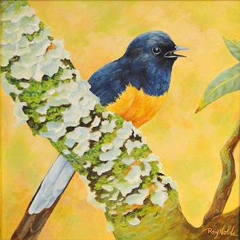 Sweet Song - Shama Thrush by Carol Reynolds