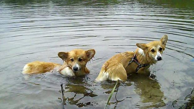 Swim at the pond by Louis Sarkas
