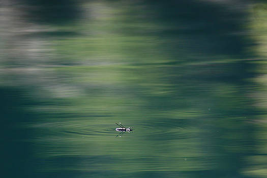 Cathie Douglas - Swimming Beetle