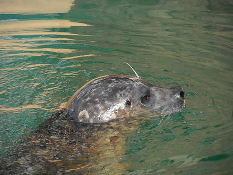 Kimberly Perry - Swimming Seal