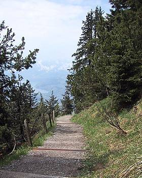 Swiss Mountain Path by Diana McClure