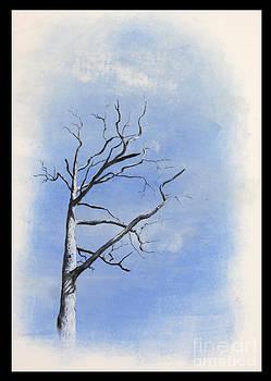Sycamore by Sarah Mushong