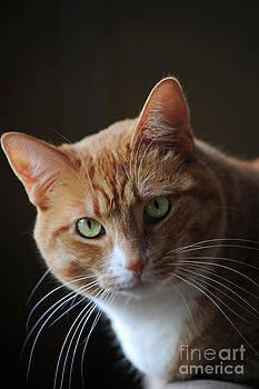 Elaine Mikkelstrup - Tabby Cat