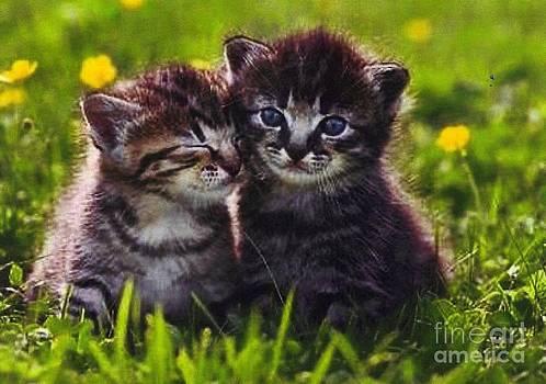 Diane Kurtz - Tabby Kittens