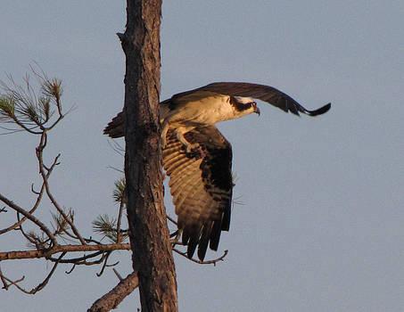 Taking Flight by Kent Dunning