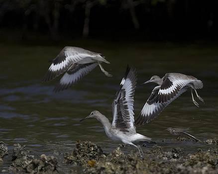Taking Flight by Laura Poniatowski