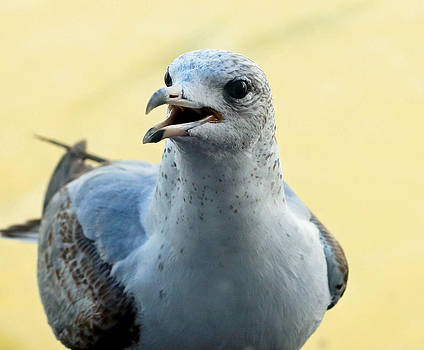 Carmen Del Valle - Talking Seagull