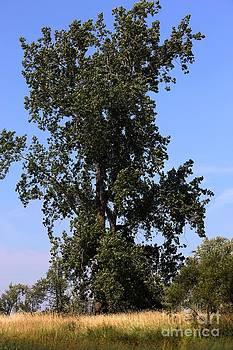 Sophie Vigneault - Tall tree