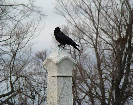 Gothicrow Images - Talon Of crow