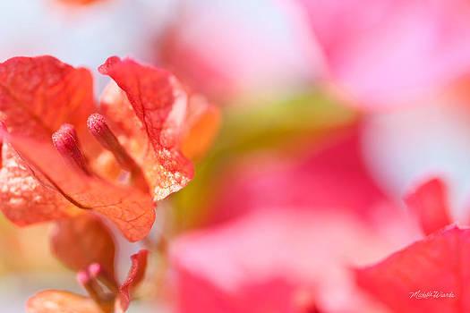 Michelle Wiarda-Constantine - Tangerine Dream