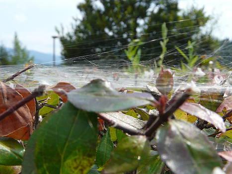 Tangled in a web by Susan McNamara