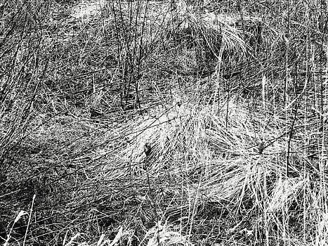 Anne Cameron Cutri - Tangled Weeds 1