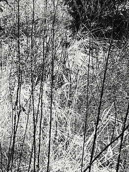 Anne Cameron Cutri - Tangled Weeds 2