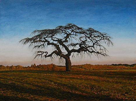 Taunton Tree by Allan OMarra