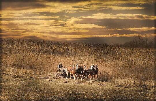 Randall Branham - Team of four horses
