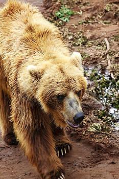 Ricky Barnard - Teddy Bear