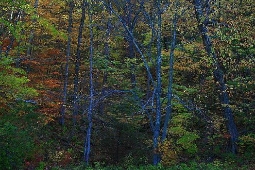 Matthew Winn - Tennessee Hills
