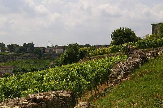Terroir of Bordeaux France by Christine Burdine